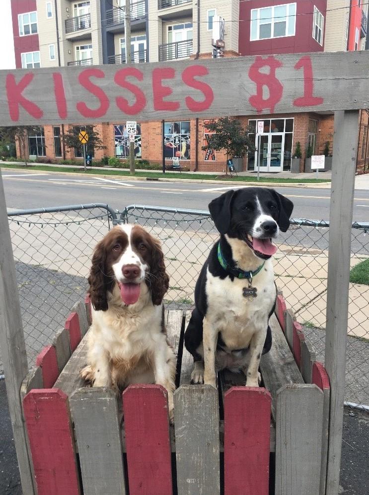 Dog Kissing Booth at The Dog Bar